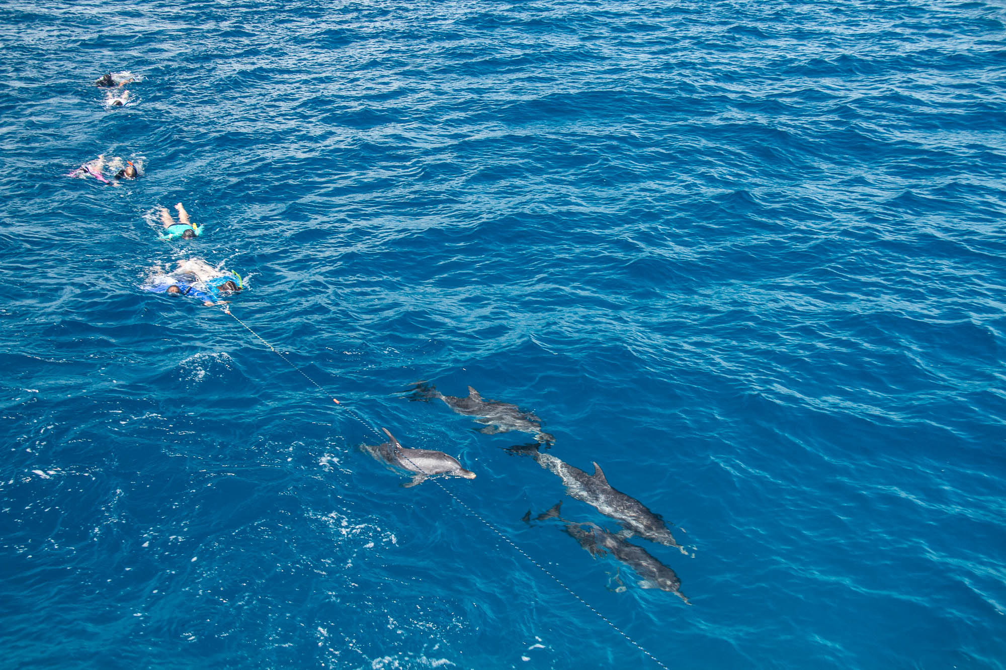 Being pulled on a rope from the boat to follow dolphins.