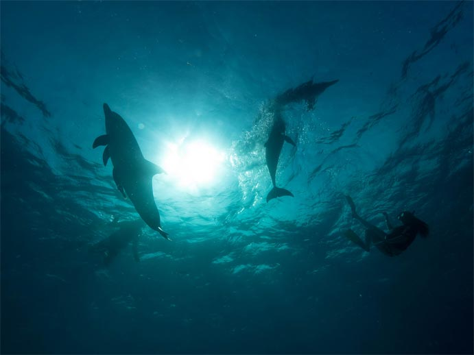Silhouette of dolphins